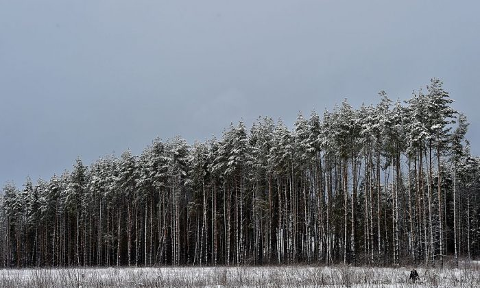 A woman walks past snow-covered trees in a forest near the village of Mesherskoye, which is about 70 km (about 43 miles) outside Moscow, on Feb. 1, 2016. (Yuri Kadobnov/AFP/Getty Images)