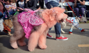 More Than 31 Million Americans Plan to Dress Their Pets for Halloween