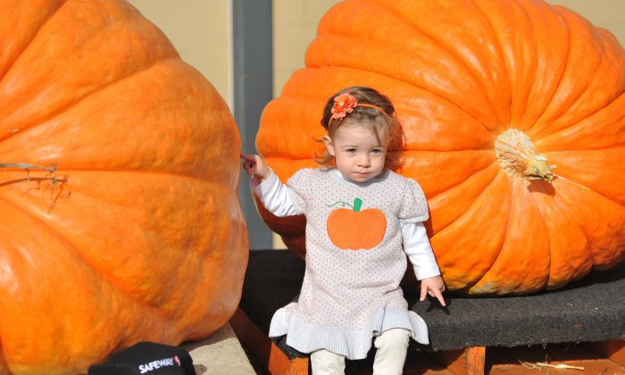 A young girl poses with giant pumpkins during the 42nd annual Safeway World Championship Pumpkin Weigh-Off Contest in the World Pumpkin Capital of Half Moon Bay, California, on Oct. 12, 2015. (Josh Edelson/Getty Images)