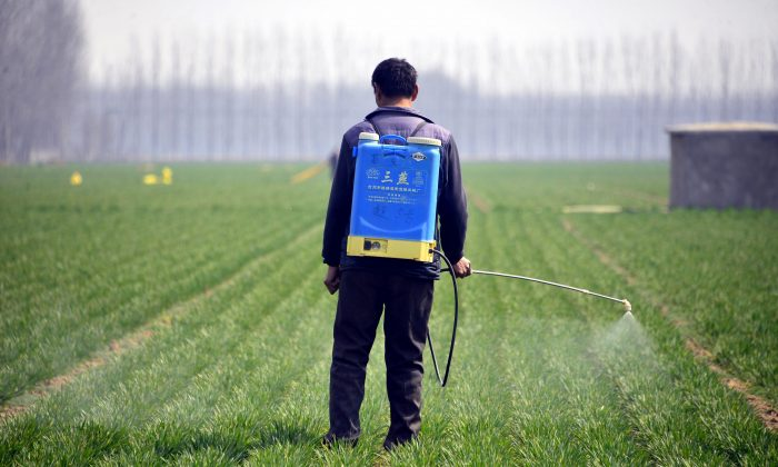 A Chinese farmer spraying pesticide in a wheat field in Chiping county in Liaocheng, east China's Shandong province in March.   (STR/AFP/Getty Images)