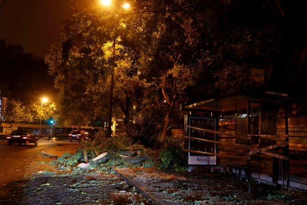 Trees seen street Benfica Lisbon