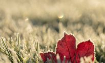 Let Nature Push You to Grow Before the First Frost Arrives