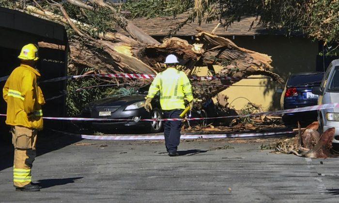 Authorities access the damage after a woman was killed after a large eucalyptus tree toppled and smashed onto a car she was inside of in the driveway of her home in TUSTIN, Calif. during the heavy Santa Ana winds on Oct. 15, 2018. (Mindy Schauer/The Orange County Register via AP)