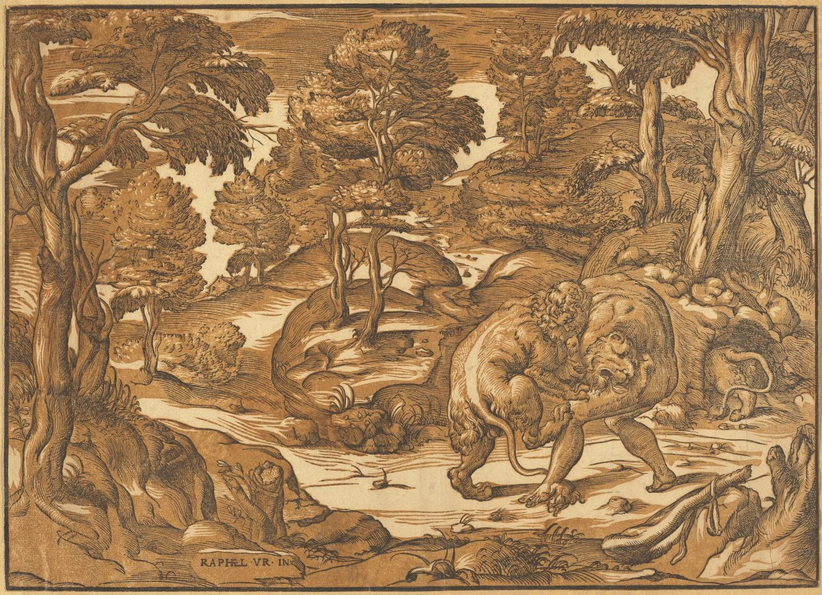 Warrior Hercules wrestles a lion in forest, black and brown chiaroscuro print. Raphael.