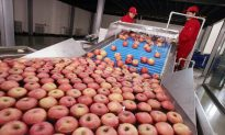 Chinese Juice Company Uses Rotten Apples for Export Products, Local Reports Say