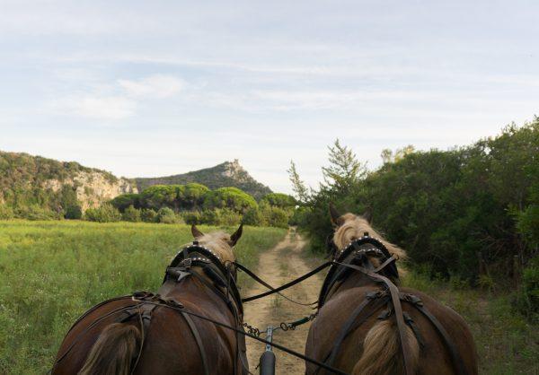 Horse drawn carriage ride through Maremma Park