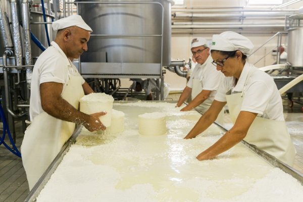Workers separate curds for Pecorino Toscano in Manciano Tuscany