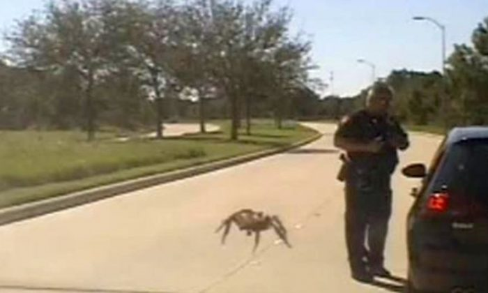 Police dashcam footage captured the moment a spider crawled across an officer's windshield at the right moment as he was stopping a motorist, on Oct. 10, 2018. (Fulshear Police)