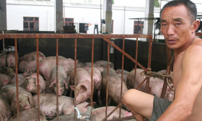 A worker inspects pigs at the Zuqiao Slaughterhouse on July 25, 2005 in Chengdu of Sichuan Province, southwest China. (China Photos/Getty Images)