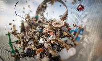 Microplastics Found in Human Feces for the First Time