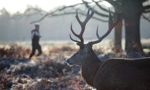 Hunter Caught After Illegally Shooting Deer Blames His Wife: Report