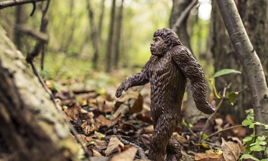 Man Fires Shots at Campers in Kentucky National Park, Claiming He Saw Bigfoot