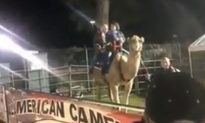 Camel Attacks Man at South Carolina Fair, Riders Terrified