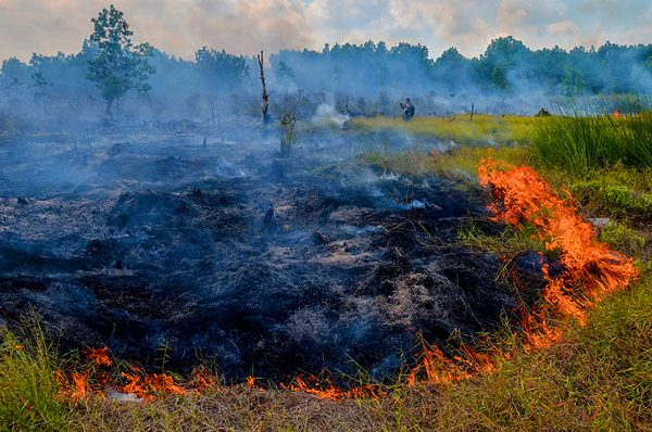 Smoke rises up from a peat-land fire