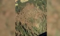 Video: Storm 'Flattens' Forest in Italy