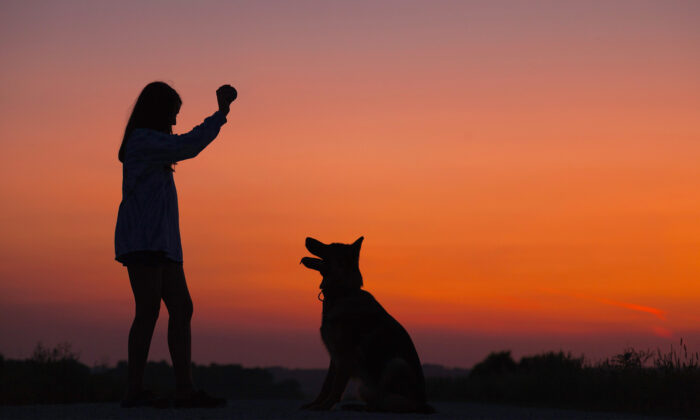Teaching our mind better tricks isn't too different from training a puppy. It takes some patience, rewards, and a clear goal. (Wyatt Ryan/Unsplash)
