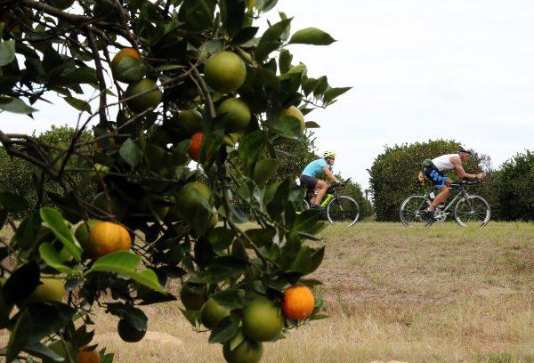 IRONMAN Florida competitors race through orange grove