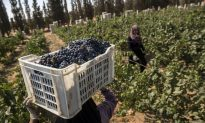 Egypt Winery Seeks Ancient Inspiration for Present-Day Success