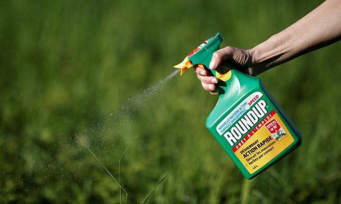 A woman uses a Monsanto's Roundup weedkiller spray without glyphosate in a garden in Ercuis near Paris, France, May 6, 2018. REUTERS/Benoit Tessier/File Photo