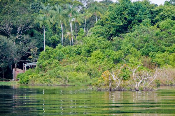 Negro river in Amazonas state, Brazil.