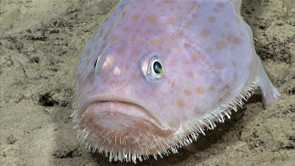 A toadfish