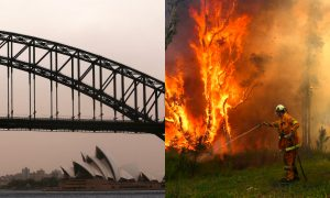 Strong Winds Cause Travel Chaos and Fan Major Bushfires in Australia
