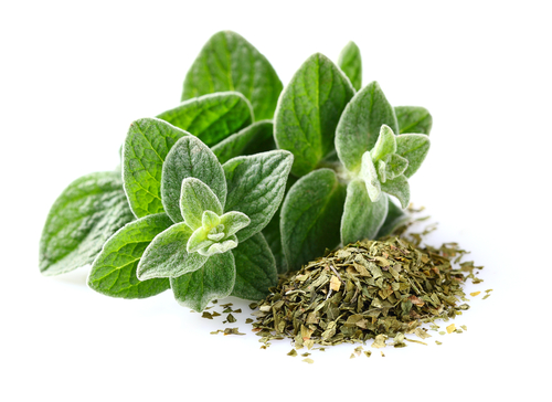 Hippocrates, the ancient Greek physician, used oregano oil to treat cuts, skin infections, psoriasis, and stomachaches. (Shutterstock)