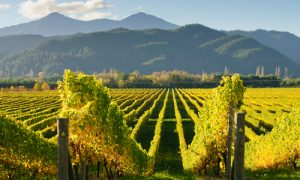 This Year in Wine, According to Wine Spectator