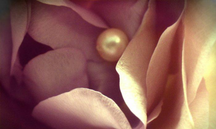 Rose and pearl. (CC0 Public Domain [https://creativecommons.org/publicdomain/zero/1.0/])