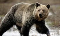 Man Found Eaten by Bear Died First From Meth Overdose