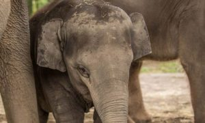 Oregon Zoo Says Youngest Elephant, Lily, Dies Suddenly From Virus