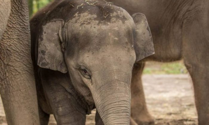 The Oregon Zoo said the youngest elephant, Lily, suddenly died from a virus on Nov. 29 (Oregon Zoo)