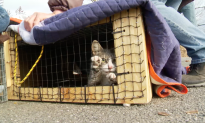 The Cat Rescuers: Fighting for Felines