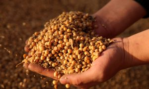 China Buys About 10 Cargos of US Soybeans After Trade Talks