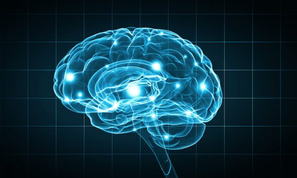 The human brain may continue to develop new brain cells even in old age, a new study offers.  (Shutterstock)