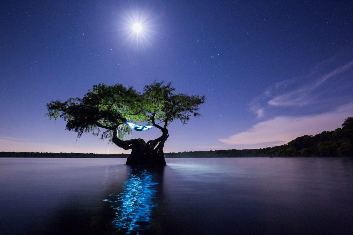 MacStone-hammock in cypress tree-c