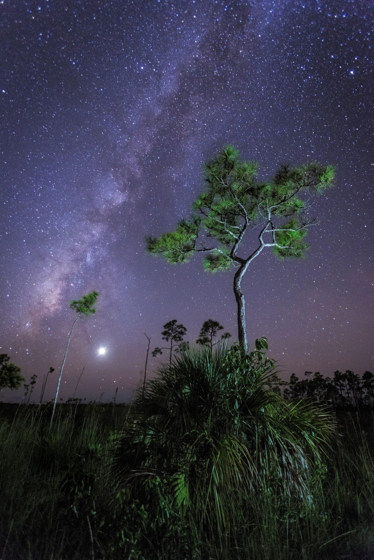 MacStone-tree and milky way