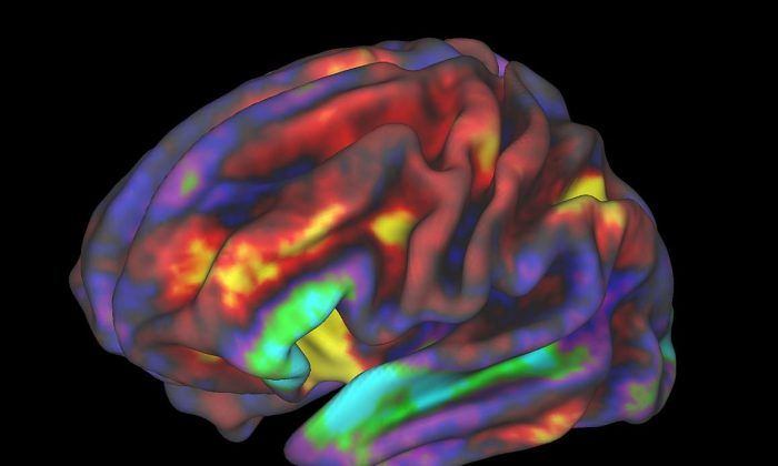 fMRI image of preteen brain while child performs a working memory task, released by ABCD researchers. The regions in yellow and red are most active. (Richard Watts, PhD, University of Vermont and Fair Neuroimaging Lab, Oregon Health and Science University)