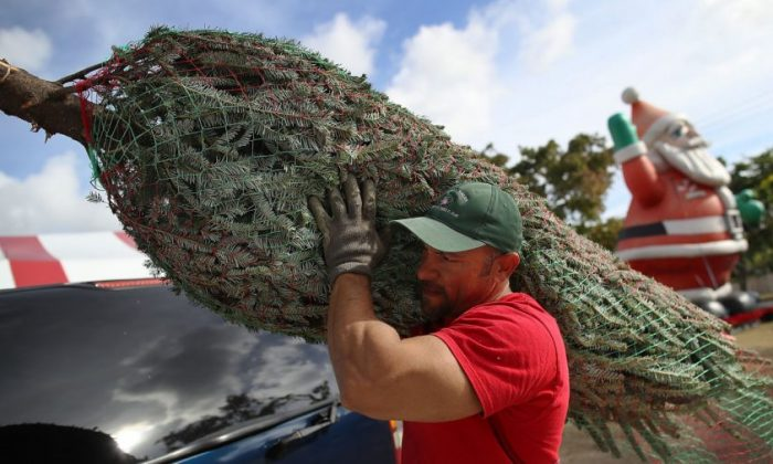 A Christmas tree seen on Nov. 27, 2018. (Joe Raedle/Getty Images)