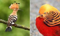 10 beautiful birds that are like works of art