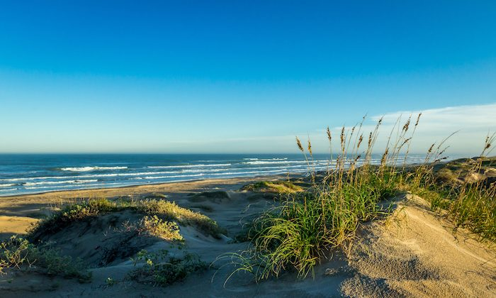 Sand Dunes. (Courtesy of South Padre Island Convention & Visitors Bureau)