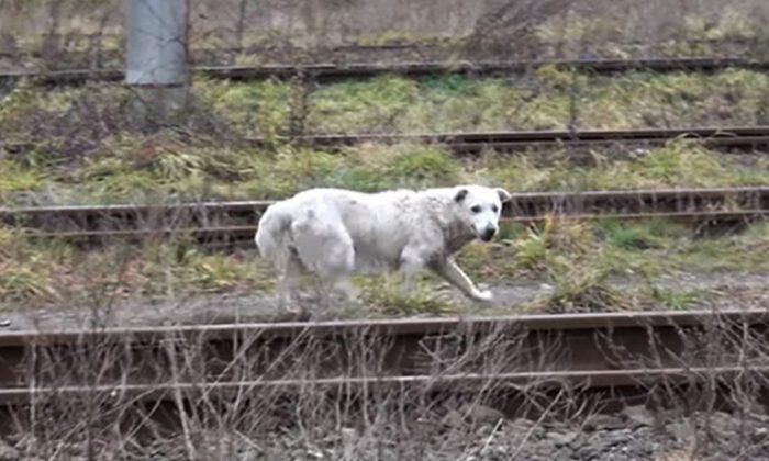 ©YouTube Screenshot | Howl Of A Dog