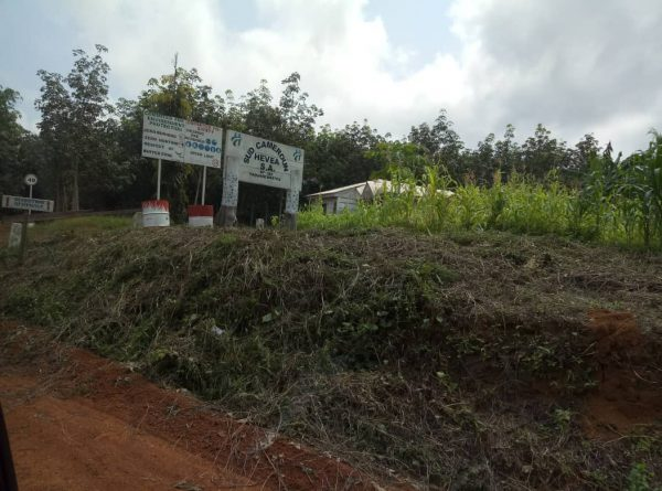 Entrance of Sudcam plantation in south Cameroon on Nov. 18, 2018. (By Amindeh Blaise Atabong/Special to The Epoch Times)