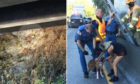 Homeless man puts safety at risk by offering to climb up steep cliff to rescue stranded dog