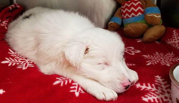 Officials said a puppy was pulled from a freezing creek in Sadieville, Ky., on dec. 12, 2018. (Scott County Animal Shelter/Facebook)