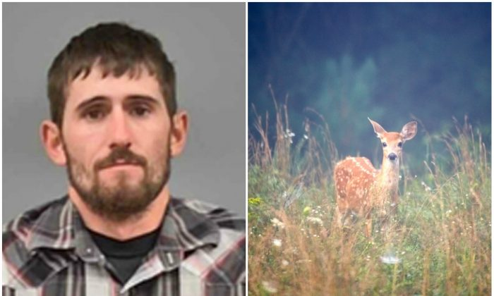 L: David Berry Jr. Berry was ordered to watch the Walt Disney movie at least once each month during his one-year jail sentence.  (Lawerence County Sheriff via AP) R: Brown deer on grass. (Mathew Schwartz/Unsplash)