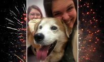 Dog runs away during fireworks show, but reunites with family after photo goes viral