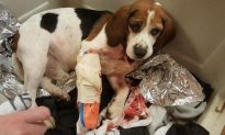 Animal Welfare Agencies Offer Reward in Case of Dogs Thrown From Car