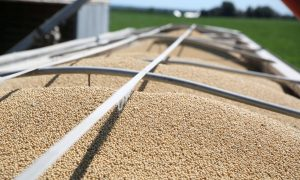 China Makes Second Purchase of US Soybeans Since Trade-War Truce, USDA Confirms