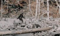 Sheriff Investigates Reports of Hunter Shooting at Man He Thought Was Bigfoot